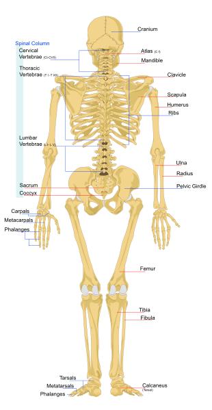 Back Injury Claims Compensation | Beardsells Personal Injury