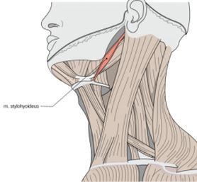 Neck Injury Compensation Claims from BeardsellsPersonalInjury.co.uk